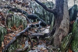 tree_ck